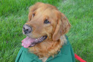 social-responsibility-dog